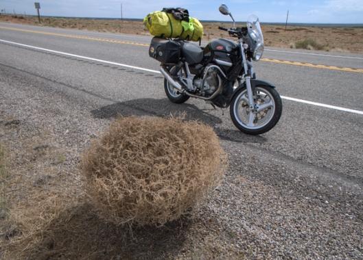 tumbleweeds have spikes
